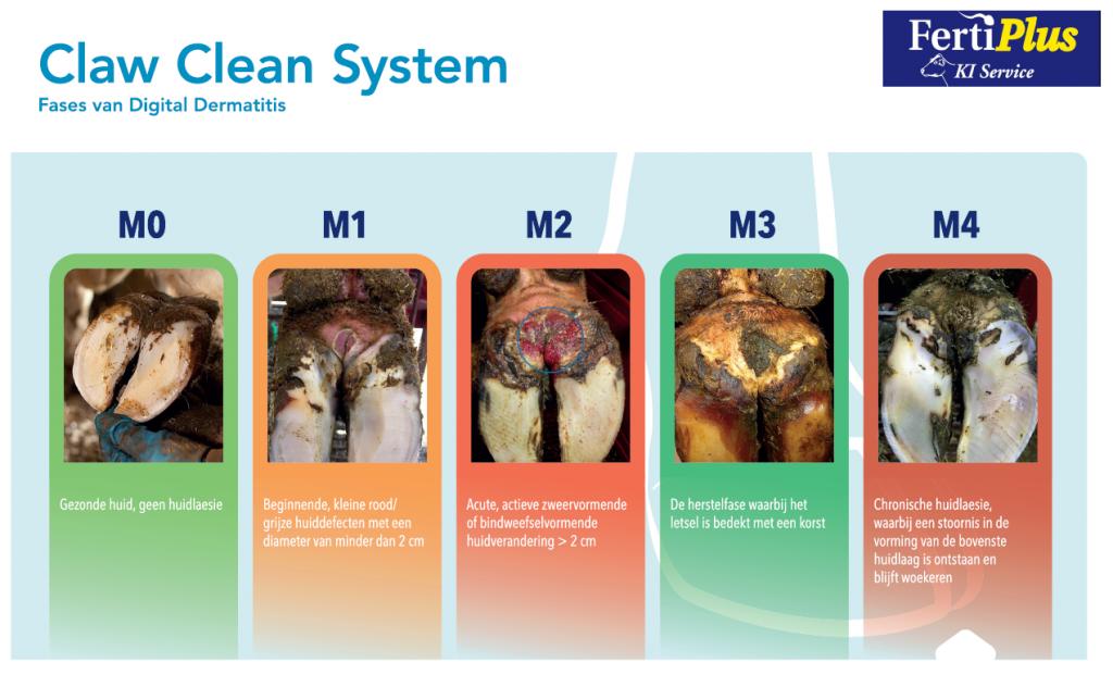 claw clean system fases van klauwproblemen